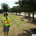 Dr. Gu, Extension Horticulturalist from College Station, can barely stand the site of infested crape myrtles.