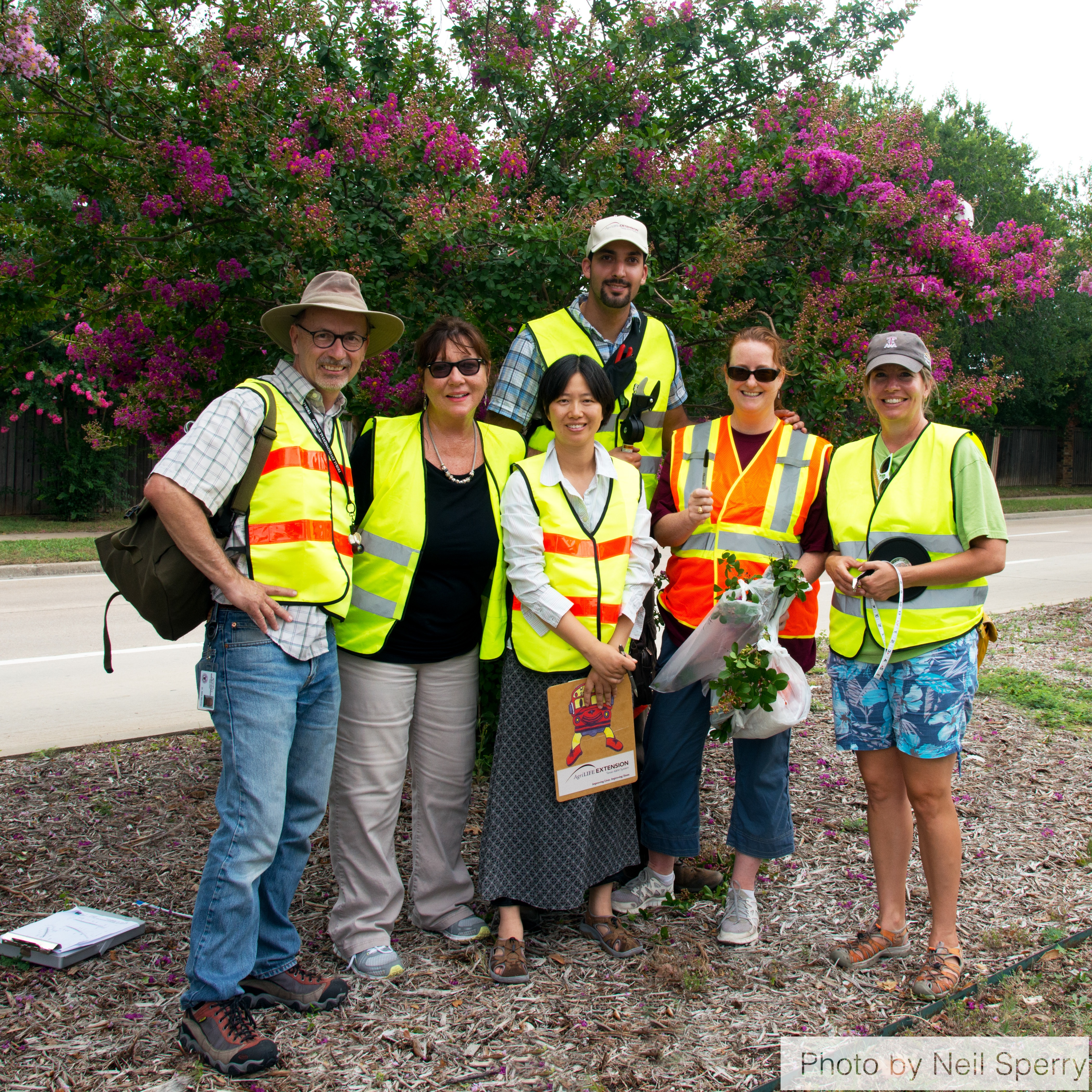 McKinney crape myrtle bark scale infestation assessment team (2014).  From left to right, Dr. Mike Merchant, Susan Owens, (front) Dr. Mengmeng Gu, (back) Erfan Vafaie, Laura Miller, Janet Laminack.