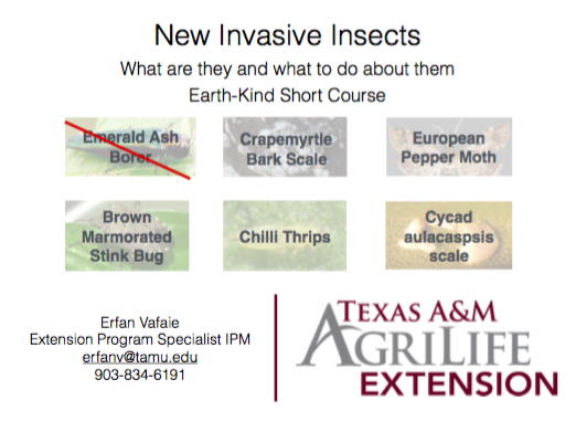 New invasive insects