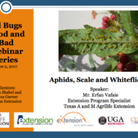 Aphids, Scale and Whiteflies
