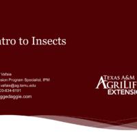 Master Gardener Entomology Training